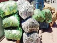 बाहरी राज्यों से सब्जियों के साथ सोलन पहुंच रहा प्रतिबंधित पॉलीथीन