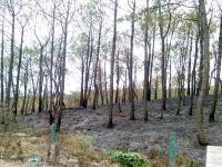 51 हैक्टेयर से अधिक भूमि पर प्लांटेशन जलकर राख, वन विभाग को लाखों का नुक्सान