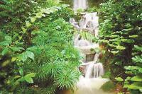 वन शक्ति और जल शक्ति से मिल सकता है जीने लायक पर्यावरण