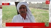 किसानों ने धान ना लगाने के बदले प्रोत्साहन राशि को नकारा, कहा- इससे नहीं होगा गुजारा