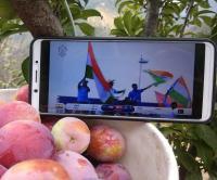 क्रिकेट का खुमार: इंग्लैंड में लगते भारत के चौके-छक्कों से कुल्लू के बगीचों में टूटे फल (PICS)