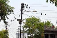 चमगादड़ है बिजली कटौती का बड़ा कारण- कमलनाथ सरकार