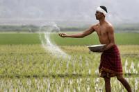 बजट में खेती के लिए हो सकते हैं कई बड़े ऐलान: रिपोर्ट
