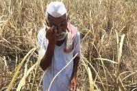 महाराष्ट्र में कर्ज में डूबे किसानों ने की आत्महत्या