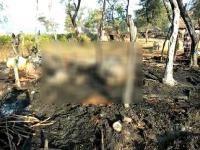 पांवटा साहिब में शरारती तत्वों ने गौशाला में लगाई आग, 5 मवेशियों की मौत (Video)