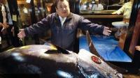 रेस्टोरेंट मालिक ने 22 करोड़ में खरीदी मछली, जानिए क्यों है खास