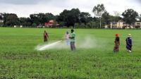 रबी फसलों का रकबा पिछले साल से 3.41 प्रतिशत कम