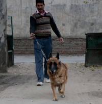 लुधियाना पुलिस को नूरी, पैक्सी, बिन्नी, शेरू, हैरी व सैंडी का सहारा
