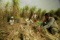 गन्ना किसानों के बकाए ने बढ़ाई सरकार की मुश्किल