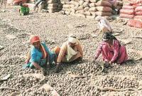 आलू उत्पादक किसानों ने दुखी होकर PM मोदी को भेजना शुरू किया मनी ऑर्डर