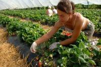 ब्रिटेन के कृषि संघों ने ब्रेक्जिट को लेकर दी चेतावनी