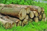 वृक्षों की अंधाधुंध कटाई से बिगाड़ रहा धरती का संतुलन