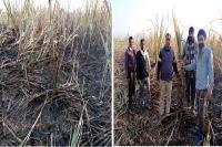 आग लगने से गन्ने की 6 कनाल फसल हुई नष्ट