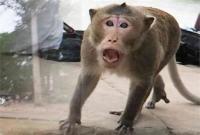 बलरामपुर में बंदरों का आतंक, 2 महिलाओं पर किया जानलेवा हमला