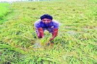किसानों को नहीं मिला खराब फसल का मुआवजा