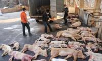 चीन में 9 लाख से अधिक सूअरों को दे दी गई मौत