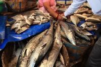आंध्र प्रदेश और पश्चिम बंगाल से आने वाली मछलियों पर लगे बैन को हटाएगी सरकार, CM ने दिया आश्वासन