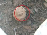 सेना ने डिफ्यूज किया कांगड़ा में मिला जिंदा Grenade (Video)