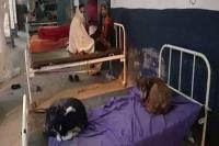 नवादा में मरीजों की जगह बेड पर कुत्ते फरमा रहे आराम, तेजस्वी ने ट्वीट कर कही ये बात