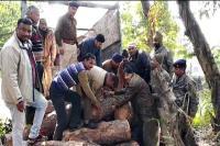 वन माफिया पर कसा पुलिस का शिकंजा, लकड़ी से भरा ट्रक पकड़ा-5 तस्कर गिरफ्तार