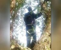 UP: आवारा और भूखे पशु चर गए पूरा खेत, आत्महत्या के लिए पेड़ पर चढ़ा आहत किसान