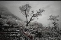 मौसम विभाग का अलर्ट- 20 और 21 जनवरी को राज्य के पहाड़ी इलाकों में होगी भारी बर्फबारी