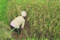 बजट 2019: कृषि ऋण लक्ष्य को बढ़ाकर 12 लाख करोड़ रुपए कर सकती है सरकार