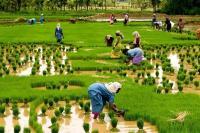 नोटबंदी और GST के बाद क्यों धीमी पड़ी कृषि क्षेत्र की रफ्तार, RBI रिपोर्ट में सामने आई वजह