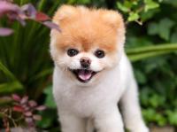 दिल टूटा तो दुनिया के सबसे प्यारे कुत्ते ने दे दी जान