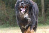पागल कुत्ते ने 12 लोगों को काटा, लोग डंडे लेकर दे रहे पहरा