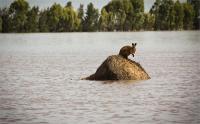 ऑस्ट्रेलिया में सदी की सबसे भयानक बाढ़, हजारों लोग विस्थापित