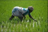 टीम गांव-गांव जाकर भरेगी किसान सम्मान निधि योजना के फार्म