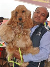 डॉग शो : चंडीगढ़ के 10 माह के कोकर स्पेनियल ने जीता अवार्ड