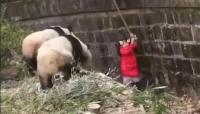 खूंखार जानवर के बाड़े में गिर गई 8 साल की बच्ची, VIDEO देख थम जाएंगी सांसें
