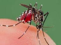 ऊना के व्यक्ति को डेंगू, PGI चंडीगढ़ में आई रिपोर्ट पॉजीटिव