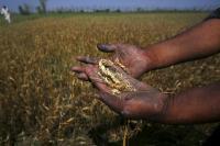 प्रधानमंत्री किसान योजना के तहत मोदी 24 फरवरी को लाभार्थियों को जारी करेंगे पहली किस्त