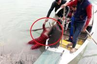 सुंदरनगर की सतलुज नदी में मिली महिला की लाश मामले में यूटर्न, एक आरोपी गिरफ्तार