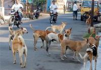 पंजाब में कुत्तों के आतंक को लेकर AAP ने जताई चिंता