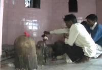 बदायूं में शिव का अनूठा मंदिर, जहां एक जगह पर उपस्थित हैं 8 शिवलिंग